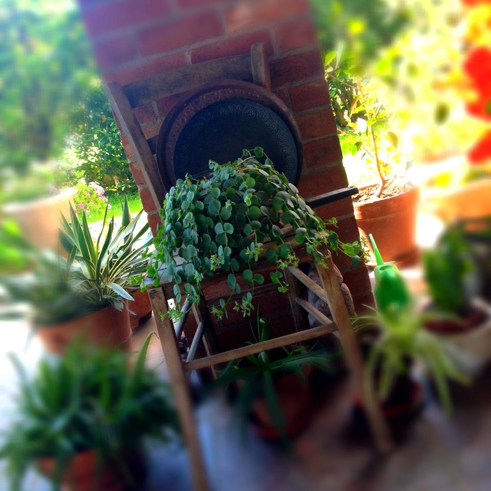 giardini (10)